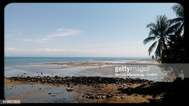Scenic View Of Beach With Palm Trees