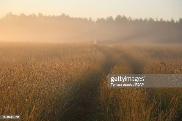 scenic view of bialowieza forest - bialowieza forest stock pictures, royalty-free photos & images