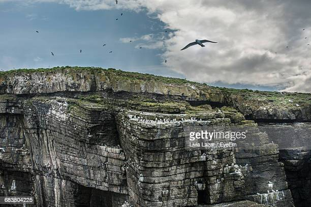 scenic view of birds flying over cliffs on island - rock overhang stock photos and pictures