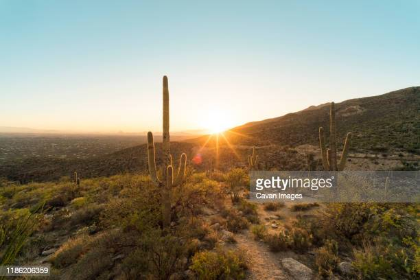 scenic view of cactus growing on mountains against clear sky during sunset at catalina state park - tucson stock pictures, royalty-free photos & images
