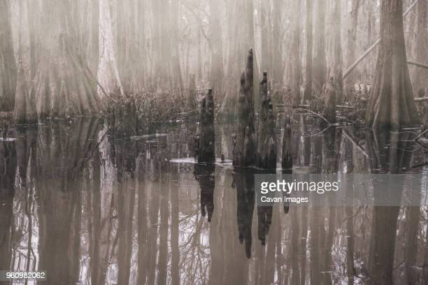 Scenic view of Caddo Lake in forest during foggy weather