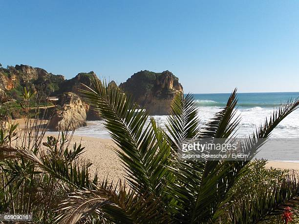 scenic view of calm beach against clear sky - alvor stock pictures, royalty-free photos & images