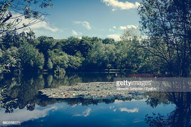 scenic view of calm lake by trees against sky - albrecht schlotter stock photos and pictures
