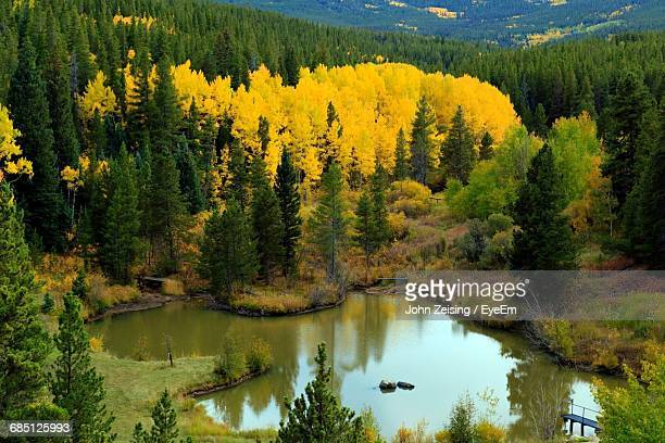 Scenic View Of Calm Pond Surrounded By Forest In Autumn