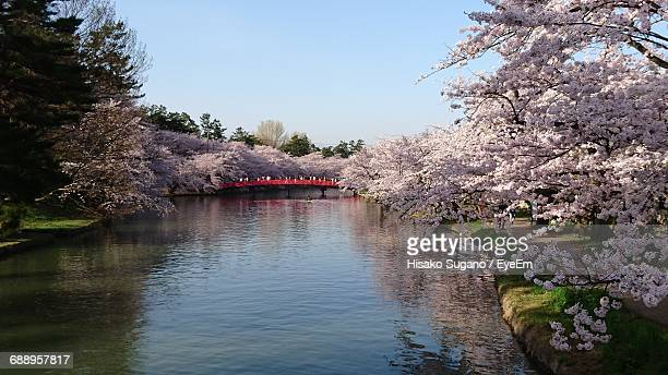 scenic view of cherry blossom trees on river - hirosaki stock pictures, royalty-free photos & images