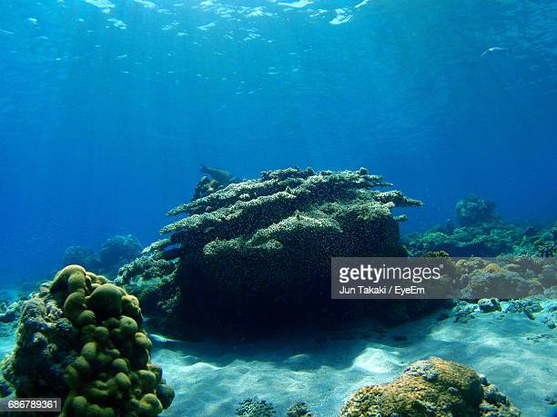 scenic view of coral at ocean floor - fonds marins photos et images de collection