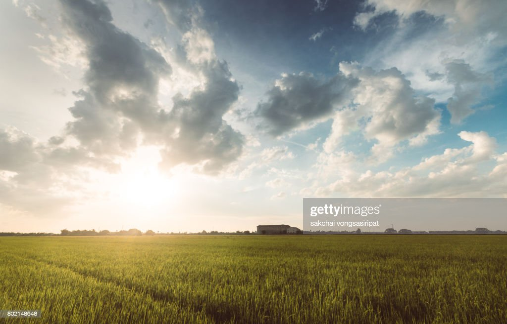 Scenic View Of Cornfield Against Sky During Sunset : Stock Photo