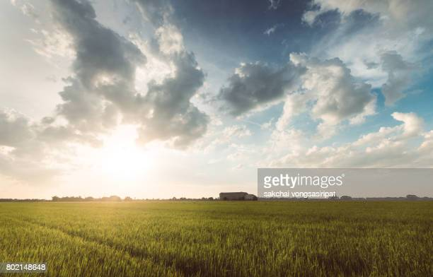 scenic view of cornfield against sky during sunset - cielo minaccioso foto e immagini stock