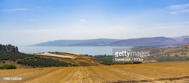 scenic view of dead sea with fields, garden of gethsemane, galillee, israel - garden of gethsemane stock pictures, royalty-free photos & images