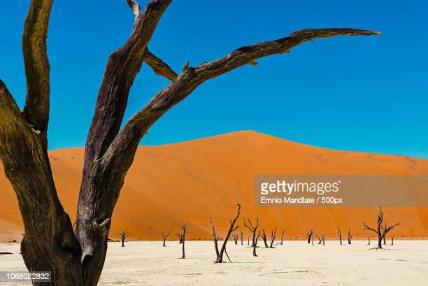 scenic view of dead trees in desert at deadvlei, namib desert - dead vlei namibia stock pictures, royalty-free photos & images