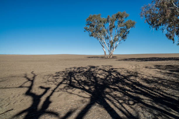 Scenic View Of Desert Against Clear Sky, Gulgong, Australia