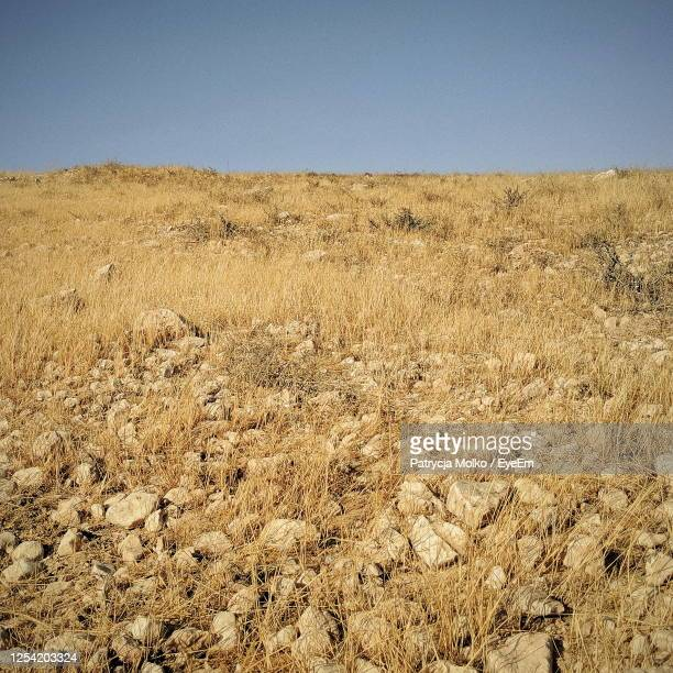 scenic view of desert against clear sky - semi arid stock pictures, royalty-free photos & images