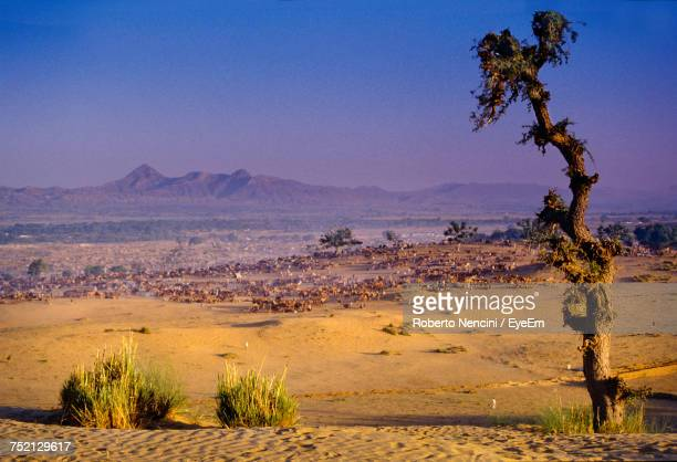 scenic view of desert against clear sky - pushkar stock pictures, royalty-free photos & images
