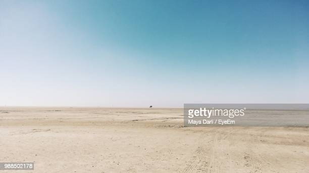 scenic view of desert against clear sky - horizon over land stockfoto's en -beelden