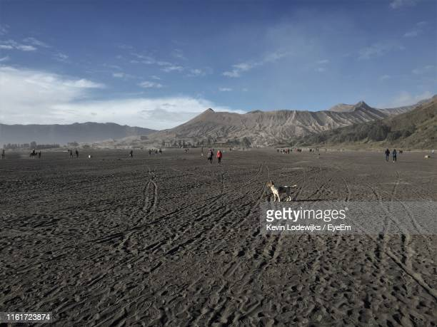 scenic view of desert against sky - tengger stock pictures, royalty-free photos & images