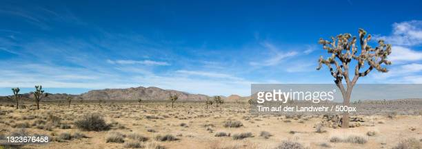 scenic view of desert against sky,twentynine palms,california,united states,usa - panoramic stock pictures, royalty-free photos & images