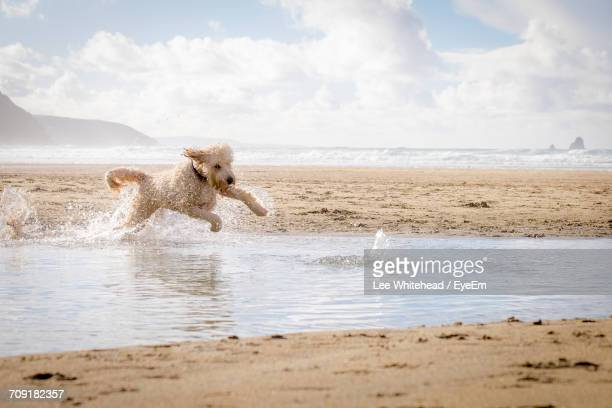 Scenic View Of Dog Jumping In Water On Beach Against Sky