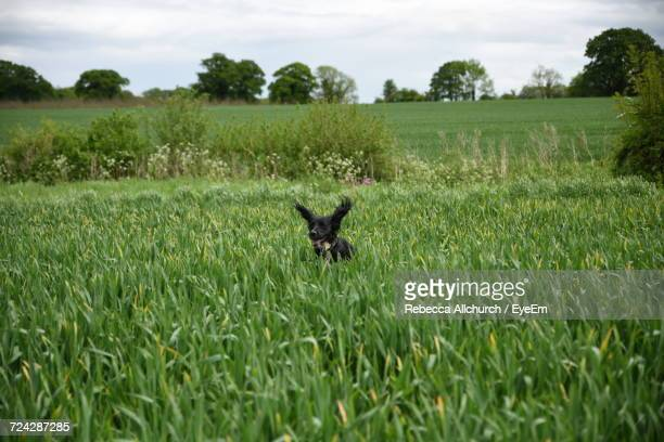 Scenic View Of Dog On Grassy Field Against Sky