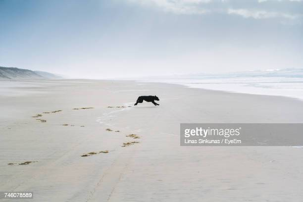 Scenic View Of Dog Running On Beach Against Sky