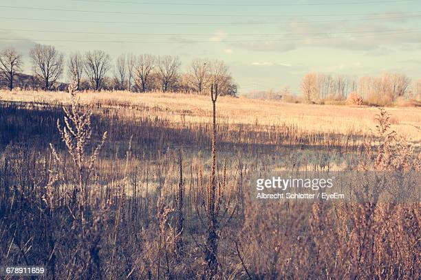 scenic view of dry field against sky during autumn - albrecht schlotter stock pictures, royalty-free photos & images