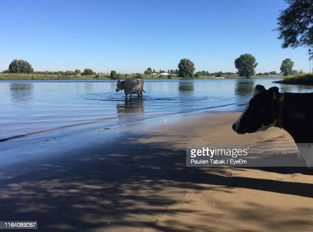 scenic view of elephant in lake against clear sky - paulien tabak stock pictures, royalty-free photos & images