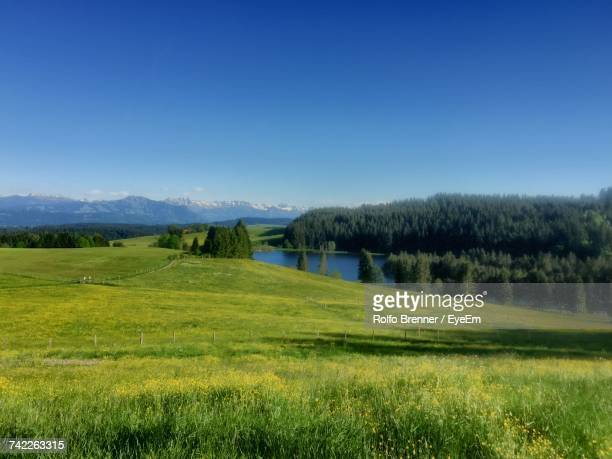 Scenic View Of Eschacher Weiher By Grassy Field Against Clear Sky At Buchenberg