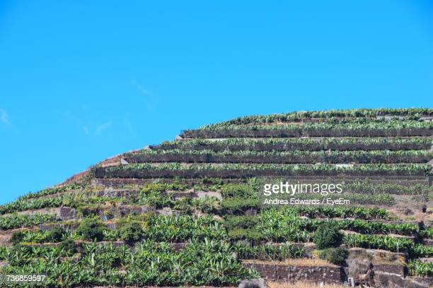 Scenic View Of Farm Against Clear Blue Sky