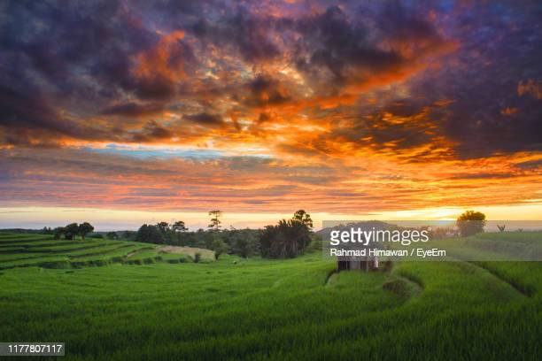 scenic view of farm against sky during sunset - rahmad himawan stock photos and pictures