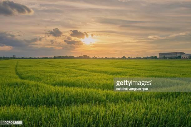 scenic view of farm against sky during sunset - grano graminacee foto e immagini stock