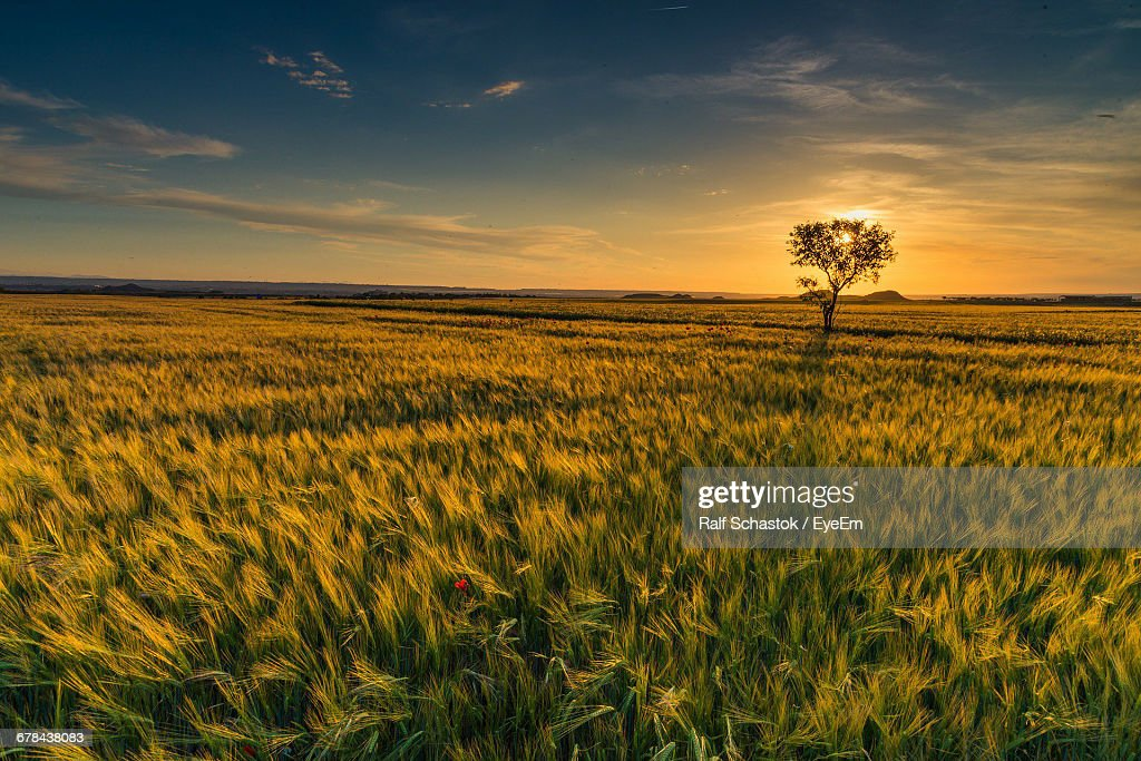 Scenic View Of Farm Against Sky During Sunset : ストックフォト