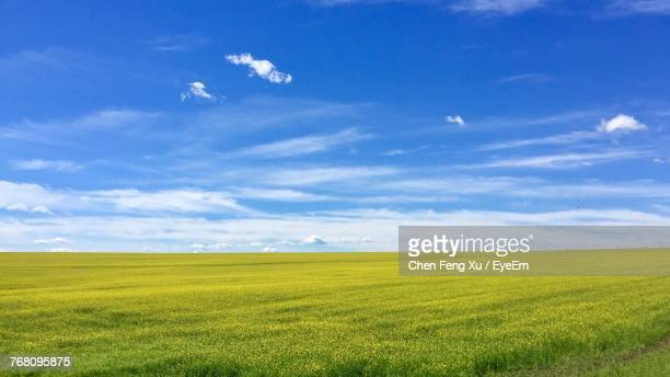 scenic view of field against blue sky - horizon over land stock photos and pictures