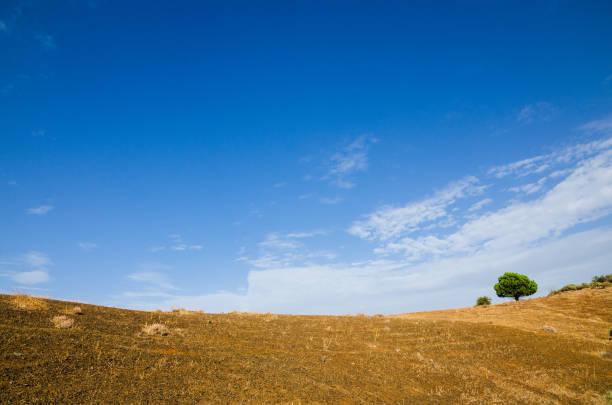 Scenic view of field against blue sky, Tejeda, Las Palmas, Spain