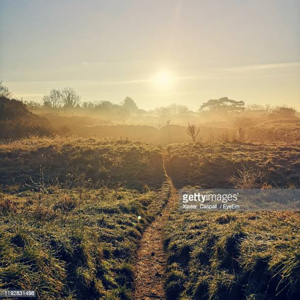 scenic view of field against bright sun - northamptonshire stock pictures, royalty-free photos & images