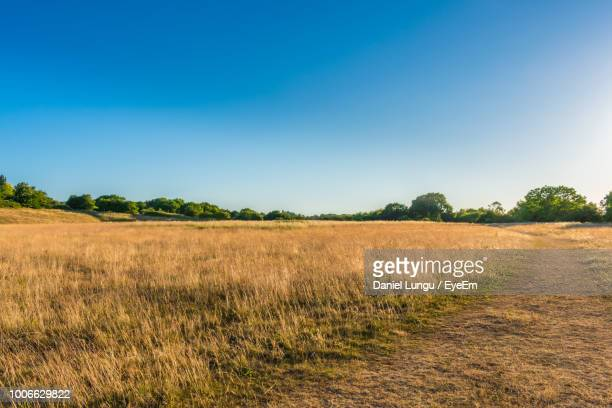 scenic view of field against clear blue sky - eyeem stock pictures, royalty-free photos & images