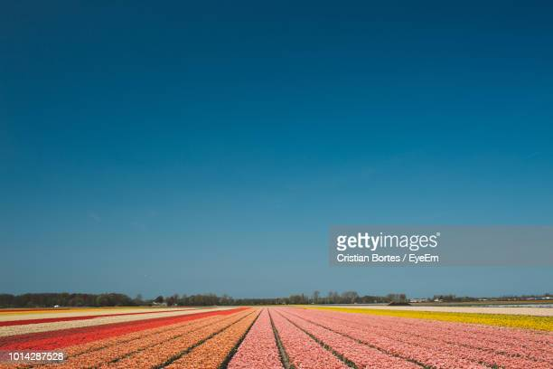scenic view of field against clear blue sky - bortes stock pictures, royalty-free photos & images