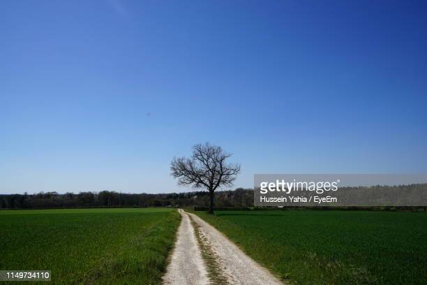 scenic view of field against clear blue sky - charente stock pictures, royalty-free photos & images