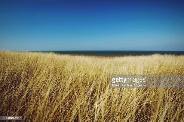 scenic view of field against clear blue sky - grass stock pictures, royalty-free photos & images