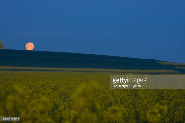 scenic view of field against clear blue sky - flower moon stock pictures, royalty-free photos & images