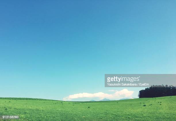 scenic view of field against clear blue sky - 緑色 ストックフォトと画像