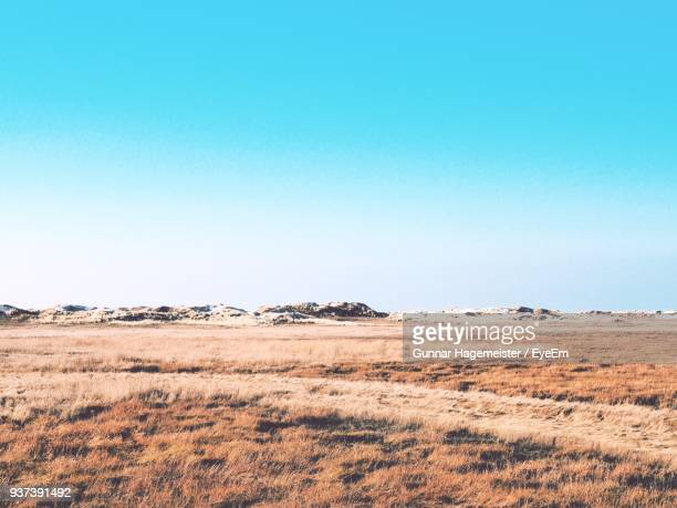 scenic view of field against clear blue sky - sankt peter ording stock-fotos und bilder