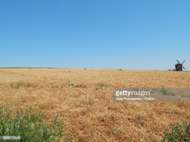scenic view of field against clear blue sky - oleg prokopenko stock pictures, royalty-free photos & images