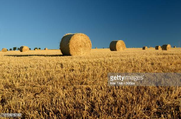 scenic view of field against clear blue sky, scotland, united kingdom - crop stock pictures, royalty-free photos & images