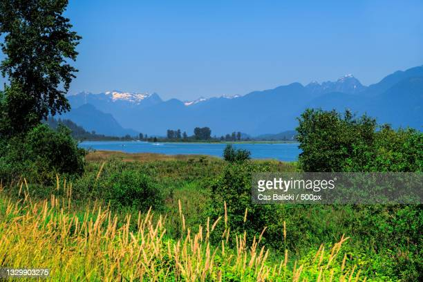 scenic view of field against clear blue sky,port coquitlam,british columbia,canada - british columbia stock pictures, royalty-free photos & images