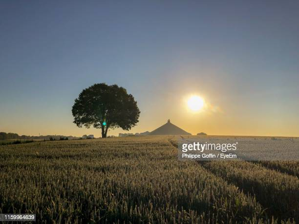 scenic view of field against clear sky during sunset - waterloo belgium stock pictures, royalty-free photos & images