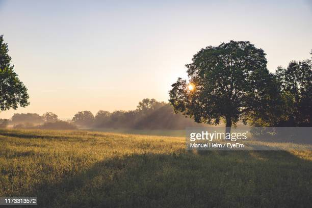scenic view of field against clear sky during sunset - bodensee stock pictures, royalty-free photos & images