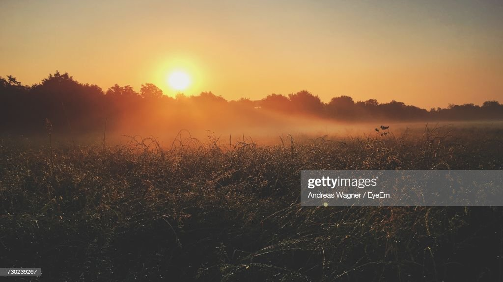 Scenic View Of Field Against Clear Sky During Sunset : Stock-Foto