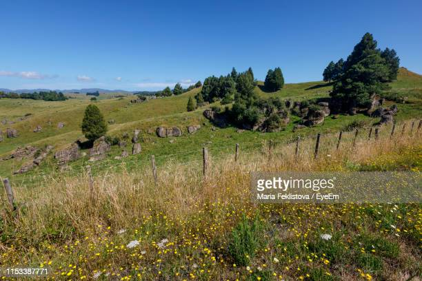 scenic view of field against clear sky - hamilton new zealand stock pictures, royalty-free photos & images