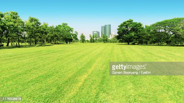 scenic view of field against clear sky - grounds stock pictures, royalty-free photos & images