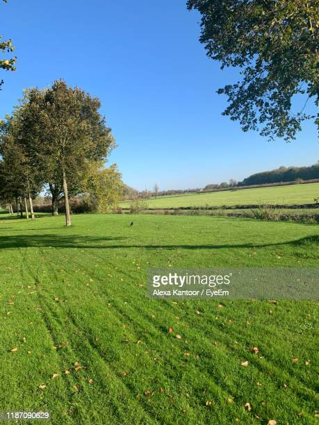 scenic view of field against clear sky - kantoor stock pictures, royalty-free photos & images