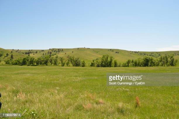 scenic view of field against clear sky - black hills stock pictures, royalty-free photos & images